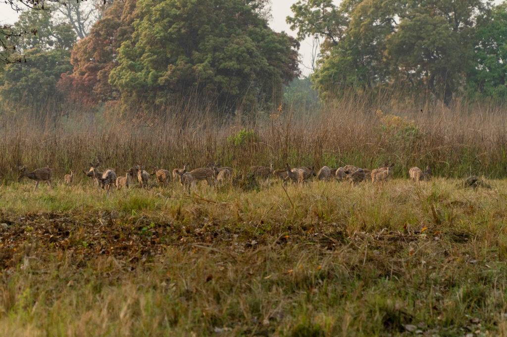 Holi in Bardiya- bardiya national park